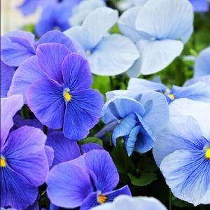 bluevioletbtq1